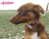 AMBER (5)