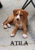ATILA 2