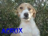 Acrux (8)