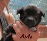 Aida (2)