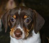 Bonnie (11)