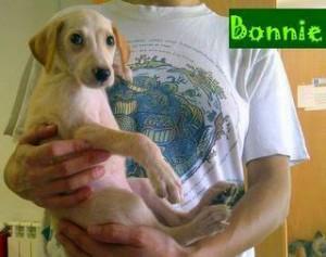 Bonnie (3)