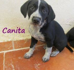 Canita