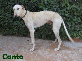 Canto (3)