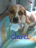 Clavel (2)