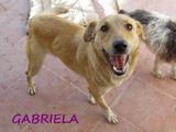 Gabriela (2)