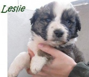 Leslie (2)