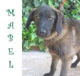 Mabel (3)