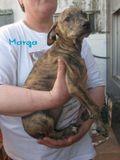 Marga (1)