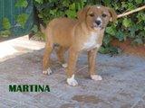 Martina (3)