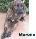 Morena (11)