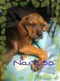 Narcisso (2)