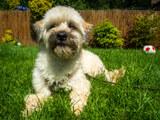 Otto (10)