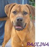 Pauline (4)