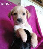 Rubia (10)