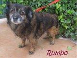 Rumbo (2)