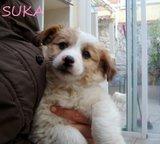 Suka (2)